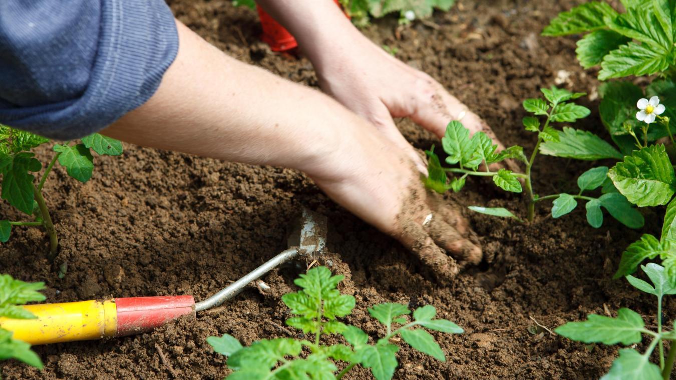 jardinage-ajr-potager-collaboratif
